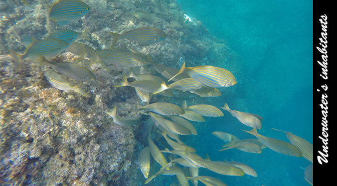 Snorkeling on the Vermilion Coast