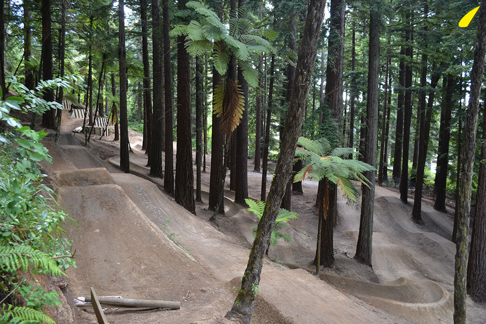 redwoods-trail