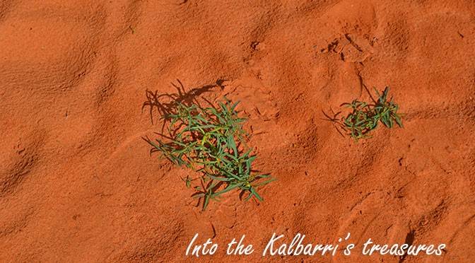 Outdoor activities in Kalbarri