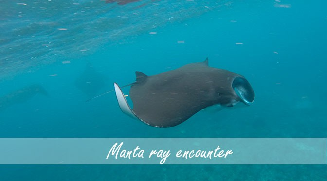 Swim with Manta Rays at Nusa Lembongan