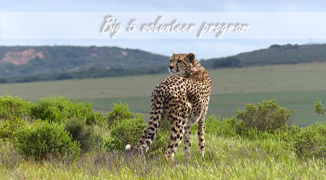Volunteer with the Big 5