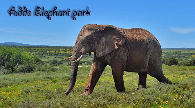 Big 7 safari in Addo Park