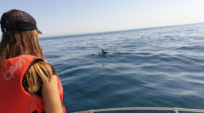 DOLPHIN WATCHING CRUISE IN ALGARVE