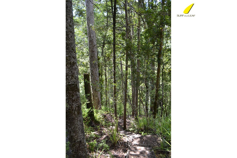 native-forest-new-zealand