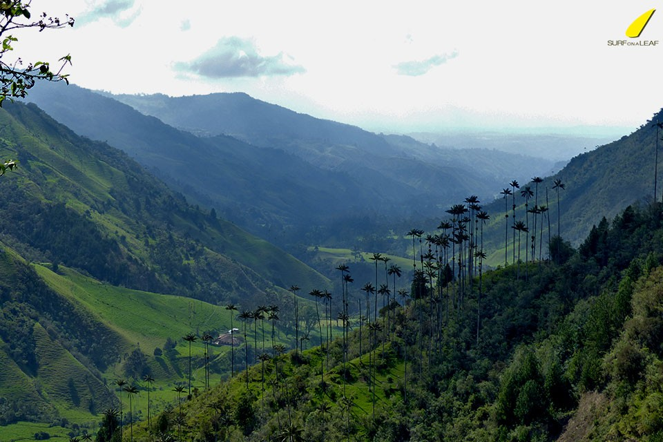 cocora-valley
