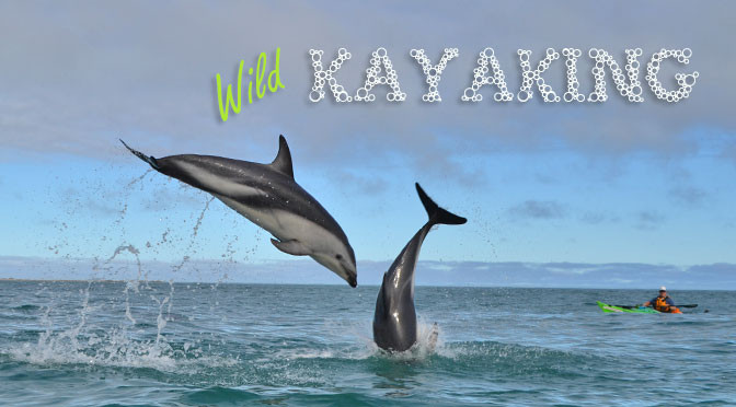 Kayaking with seals and dolphins