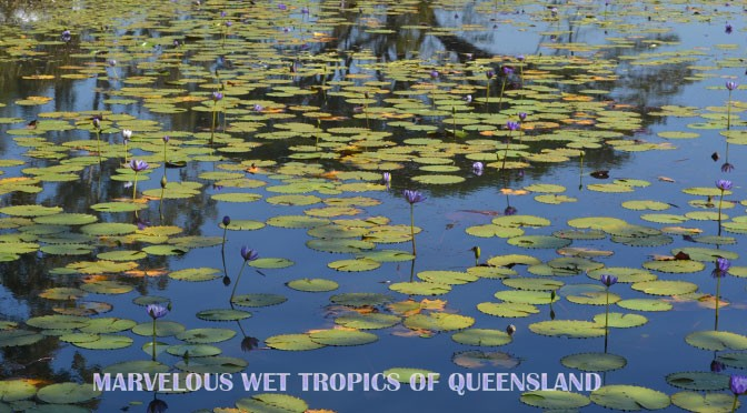 Queensland's Wet Tropics